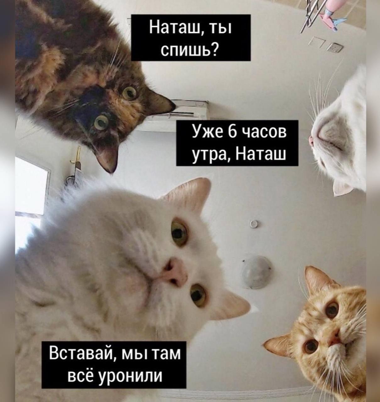 Наташ
